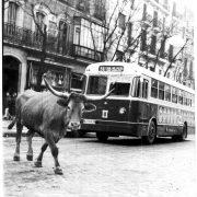 CIUDADES - ESPAÑA - MADRID - ANIMALES POR LAS CALLES